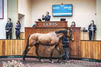 SALES: Channon chasers in demand at Goffs UK - The Irish Field