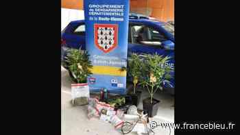 Un couple de trafiquants de drogue arrêtés à Saint-Junien - France Bleu