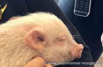 Tierischer Besuch - Mannheimer Morgen