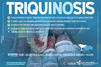 Detectaron un caso de triquinosis en Santa Isabel y recuerdan las medidas preventivas - InfoPico.com