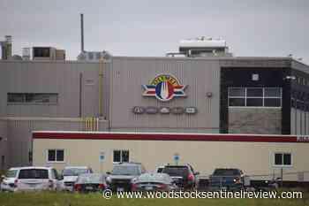 Olymel sells Ontario hogs to U.S. - Woodstock Sentinel Review