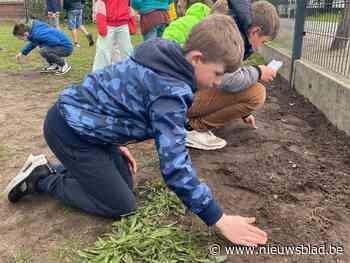 11.000 kinderen zetten jarig Bosland in de bloemetjes