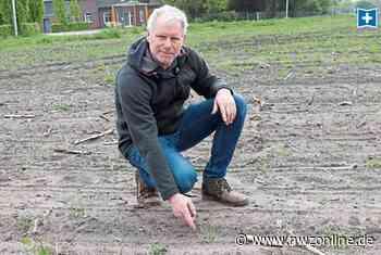 Vögel graben 75.500 Pflanzen aus: Saatkrähen fressen Maisfeld in Friesoythe leer - Nordwest-Zeitung