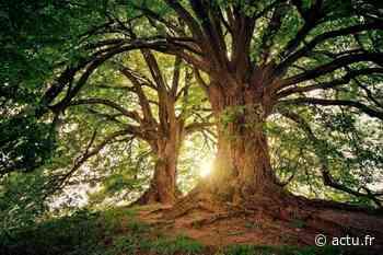 Près d'Aizenay, un concours d'œuvres d'art sur le thème de l'arbre - actu.fr