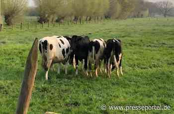 POL-VIE: Grefrath: Soviel Ablehnung der Rindviecher- wir wollten doch nur helfen.....- Fotoberichterstattung- - Presseportal.de