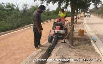 Colocan tubería para riego en parque El Encino - El Heraldo de Chihuahua