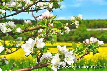 Regenwasser nutzen – Jungbäume pflanzen - Westfalen-Blatt