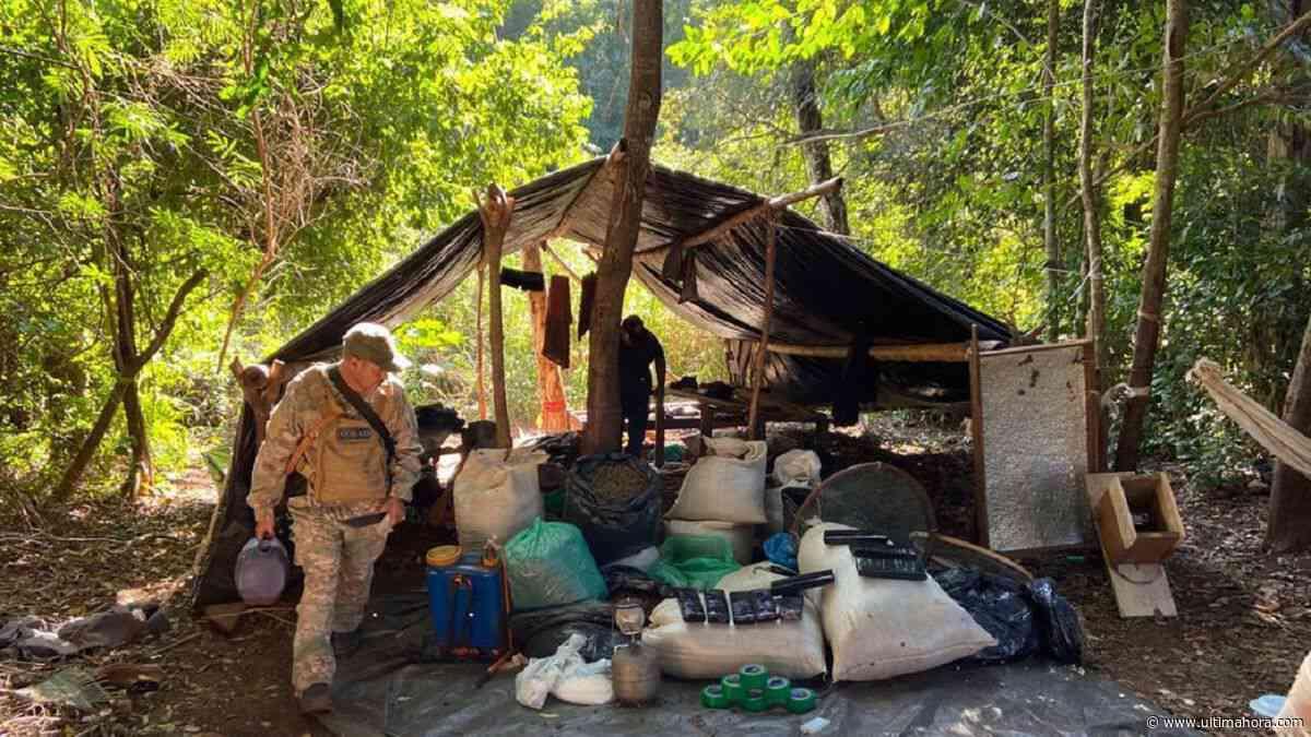 Senad detecta más de 7 toneladas de marihuana en Capitán Bado - ÚltimaHora.com