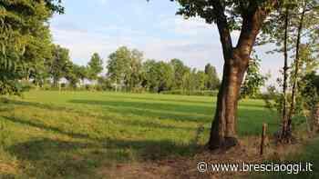 Calcinato, alla cascina Malora sboccia un futuro verde - Brescia Oggi