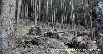 Überraschendes Plus im Gemeindewald von Simmerath - Aachener Zeitung