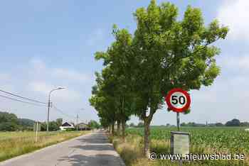 """Moeten bomen wijken voor fietspad? """"We zijn aan het onderhandelen"""" - Het Nieuwsblad"""