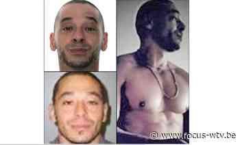 Verdachte (45) moordpoging gevat in Gistel - Focus en WTV