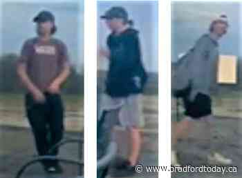 Crime Stoppers releases video of East Gwillimbury drive-in vandals - BradfordToday