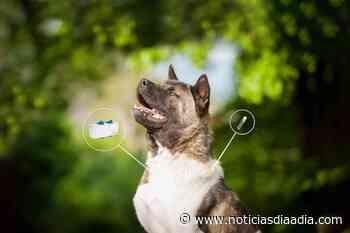 """Chipaque implementa """"cedulas"""" para perros y gatos - Noticias Día a Día"""