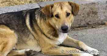 Alcalde de Ubaté propuso sacrificar los perros callejeros de su pueblo y luego se retractó - Noticias Caracol
