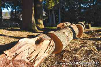 SD46 defends removing trees at Gibsons Elementary - Coast Reporter