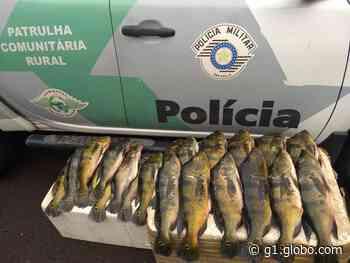 Abordado em Tupi Paulista, homem recebe multa de R$ 1,6 mil por transporte irregular de peixes - G1