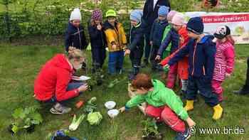 """""""GemüseAckerdemie"""": Kita in Bergtheim startet Projekt für Kinder - BR24"""