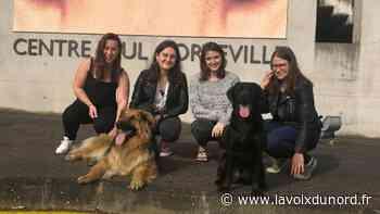 Wasquehal: top départ pour la course solidaire au profit des chiens guides d'aveugles - La Voix du Nord