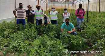 Así funciona La Granja Demostrativa, un proyecto de agricultura sostenible en Suratá, Santander - Semana