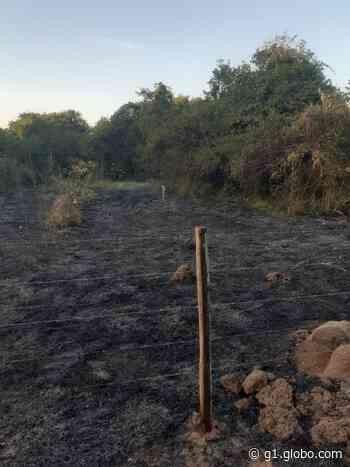 Fogo destrói quase 3.000 m² de área de preservação em Ituiutaba - G1