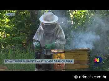 Nova Itaberaba investe na atividade de apicultura - ND Mais