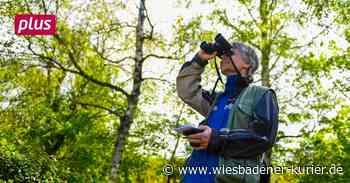 In Eppstein dem Artensterben auf der Spur - Wiesbadener Kurier