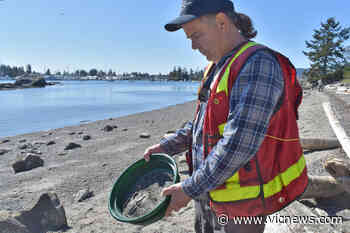 North Saanich's Tryon beach is a biological gold mine – Victoria News - Victoria News
