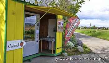 Beeren hoffen auf die Sonne - Hartheim - Badische Zeitung