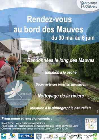 Petites bêtes du cours d'eau Pont de Baulette Meung-sur-Loire - Unidivers