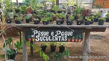 Pegue e pague: é assim que se compra suculentas em Serra Negra - ACidade ON