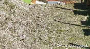 Orso a Montereale: sceglie l'arnia con più miele e scappa - Il Messaggero