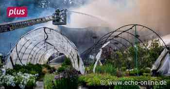Birkenau Halbe Million Euro Schaden bei Großbrand in Birkenau - Echo Online