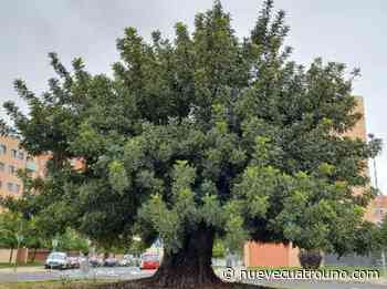 Logroño presenta sus veinticuatro árboles y arboledas más singulares - NueveCuatroUno