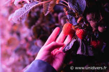 Visite de notre ferme urbaine Agricool Ferme urbaine Agricool La Courneuve - Unidivers