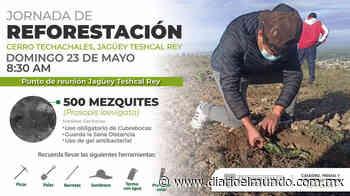 Invita Tecamachalco a jornada de reforestación - Diario El Mundo de Córdoba