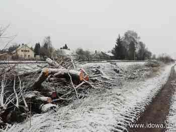 Mallersdorf-Pfaffenberg - Kahlschlag entlang der Linie der Gäubodenbahn - idowa