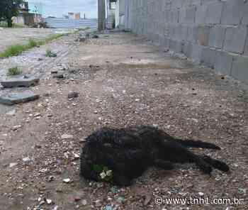 Mortes de gatos nos bairros Pinheiro e Bebedouro são investigadas pela polícia; veja vídeo - TNH1