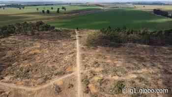 Três homens e um idoso são presos por desmatamento ilegal em Paracatu - G1