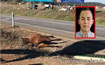 Caballo causa accidente fatal en la vía Puerto López – Villavicencio - Extra Palmira