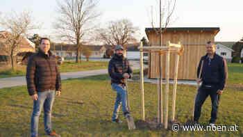 Jahresbaum - Linde für den Sportplatz in Waltersdorf - NÖN.at