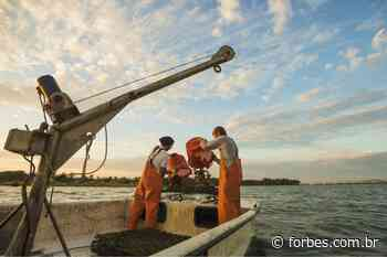 Brasil adere à Blue Justice para proteger a indústria pesqueira - Forbes Brasil