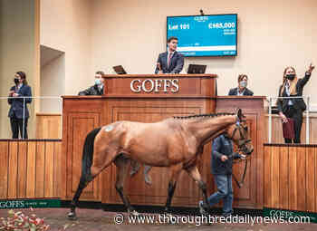 Registrations Open at Goffs Online to Bid at Arqana Breeze-Up Sale - Thoroughbred Daily News