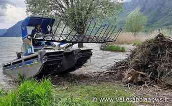 Bagolino - Il gatto del lago in azione a Ponte Caffaro - Valle Sabbia News