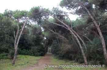 Giugliano, la Regione Campania blocca la vendita della pineta di Varcaturo - Cronache della Campania
