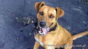 Reclamo de justicia por un perro asesinado en Villaguay - UNO Entre Rios