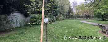 Macherio: un albero al parco in ricordo di Fabio Propato, trentenne vittima del Covid - Cronaca, Macherio - Il Cittadino di Monza e Brianza