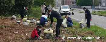 Sovico: in quaranta per pulire il bosco di Cascina Greppi - Cronaca, Macherio - Il Cittadino di Monza e Brianza
