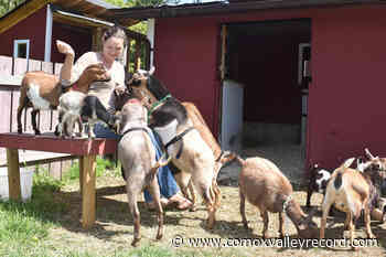 VIDEO: Courtenay goat business a hit with the kids – Comox Valley Record - Comox Valley Record