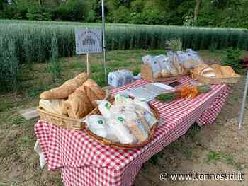 STUPINIGI - Il pane realizzato tra Candiolo, None, Orbassano, Vinovo e Nichelino entra nel paniere dei prodotti tipici della provincia - TorinoSud
